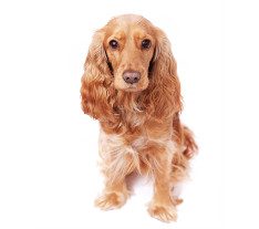 image of long haired dog to accompany dog bathing and drying services