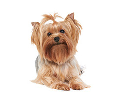image of long haired dog to accompany dog styling services