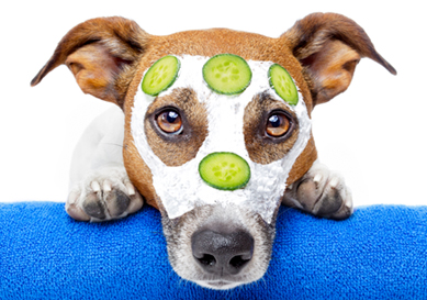 Dog with facial treatment - cream and cucumber slices on his face